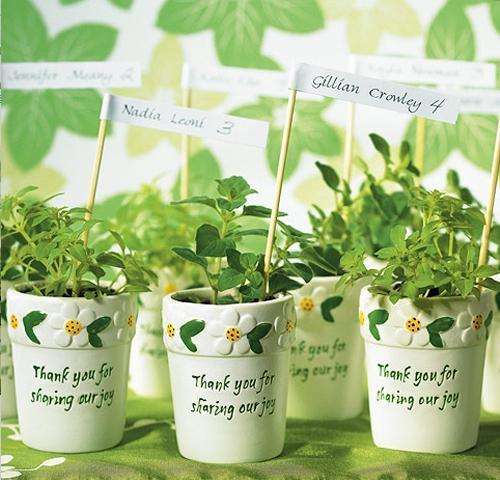piante-aromatiche-bomboniere
