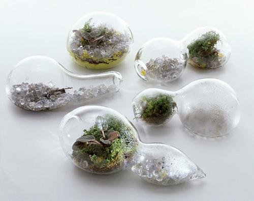 giardino sotto vetro