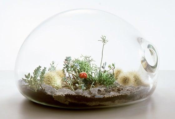 Come realizzare mini giardini in vetro terrarium