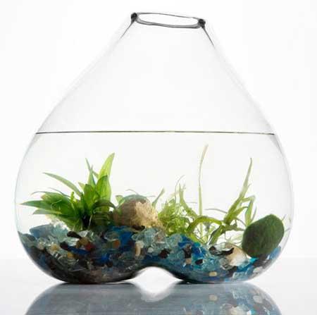 giardino acquatico sotto vetro