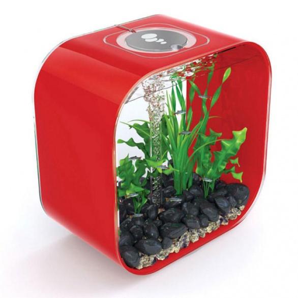 Acquario per le piante