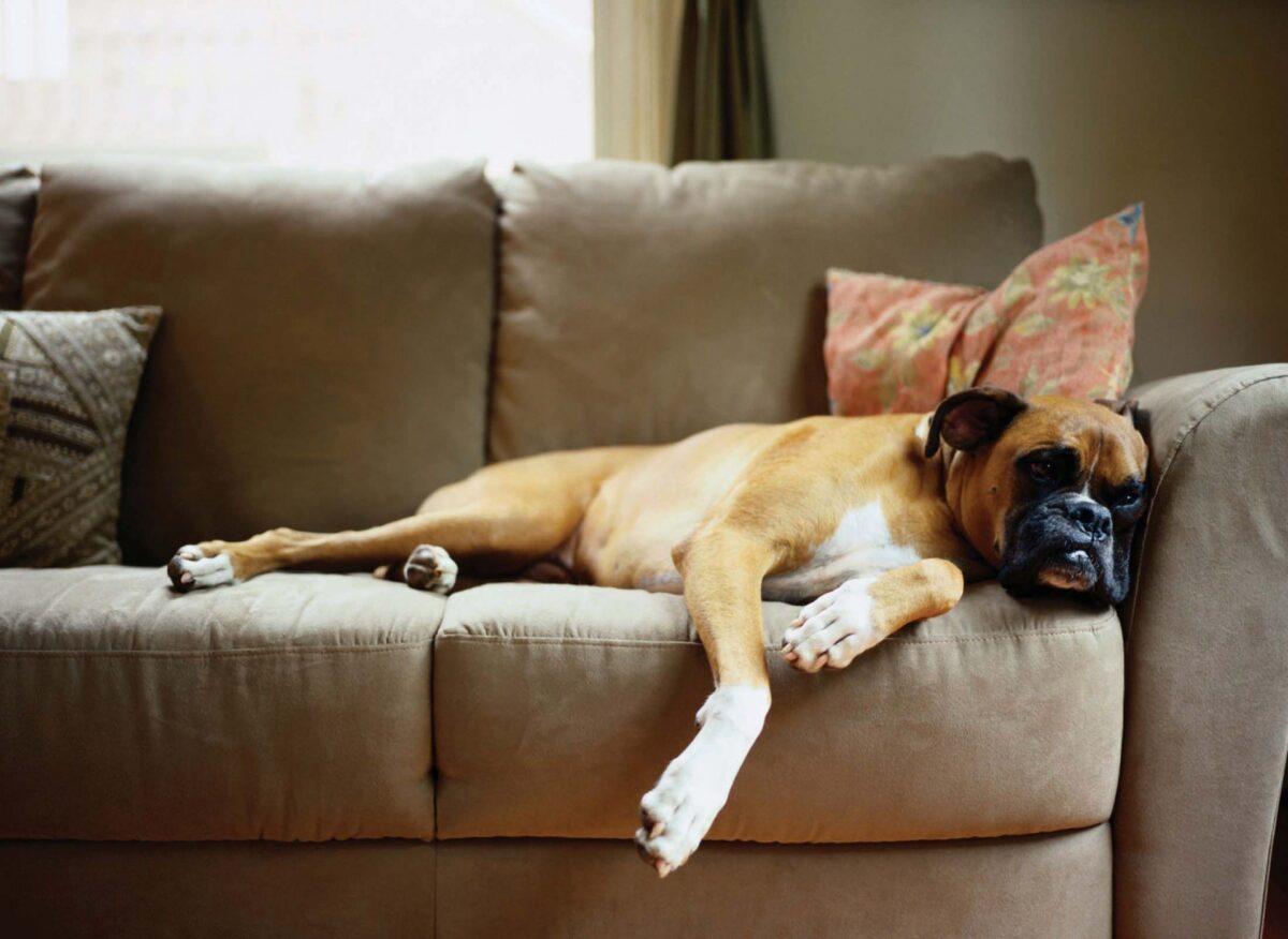 Divano Tessuto Antimacchia Opinioni divano tessuto antimacchia e idrorepellente