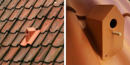 casetta uccelli tetto
