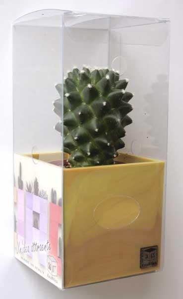 piante magnetiche