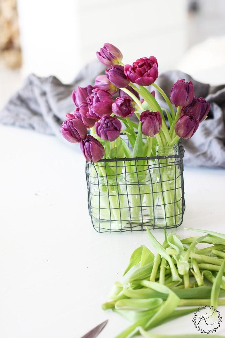 tulipani-2