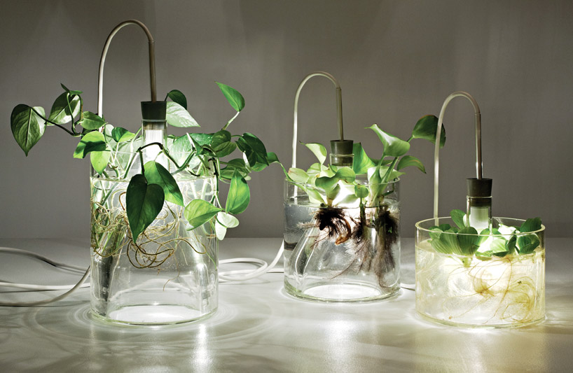 Vasi con fiori e piante acquatiche - Vasi piante design ...