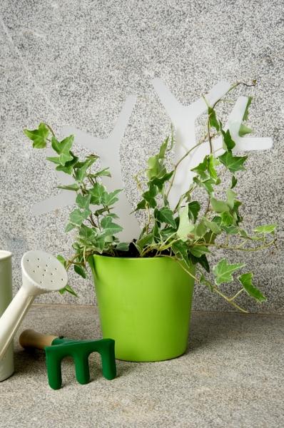 piante rampicanti in casa