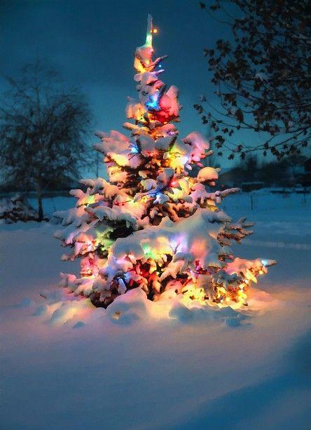 Galleria foto - Addobbare l'albero di Natale Foto 1
