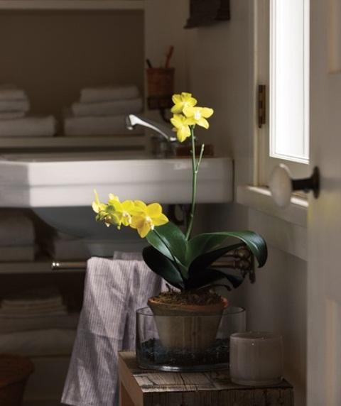 Galleria foto - Quali piante scegliere per il bagno? Foto 52