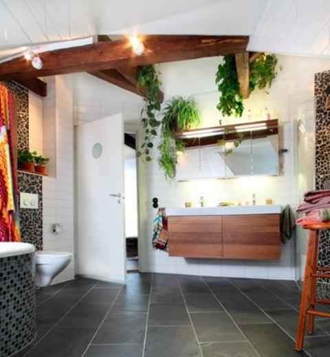 Galleria foto - Quali piante scegliere per il bagno? Foto 56