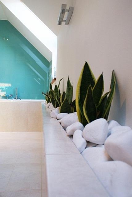 Galleria foto - Quali piante scegliere per il bagno? Foto 64