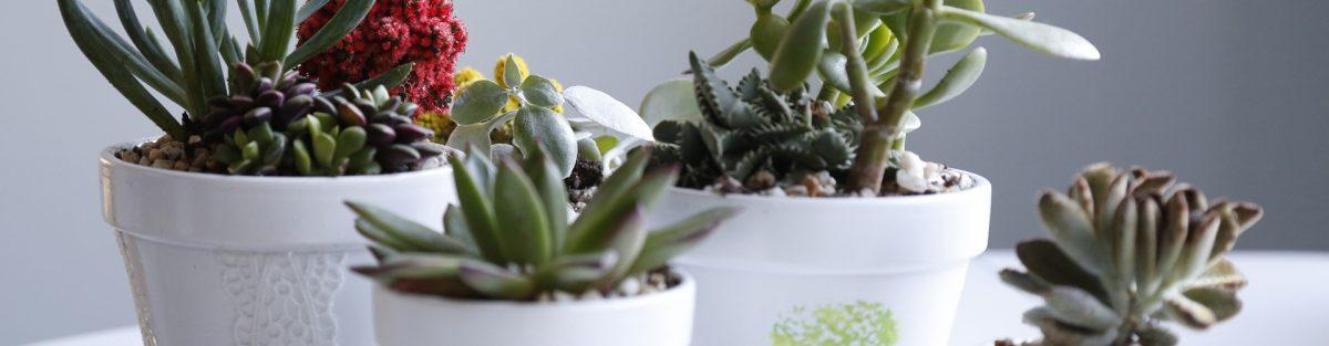 vasi-piante