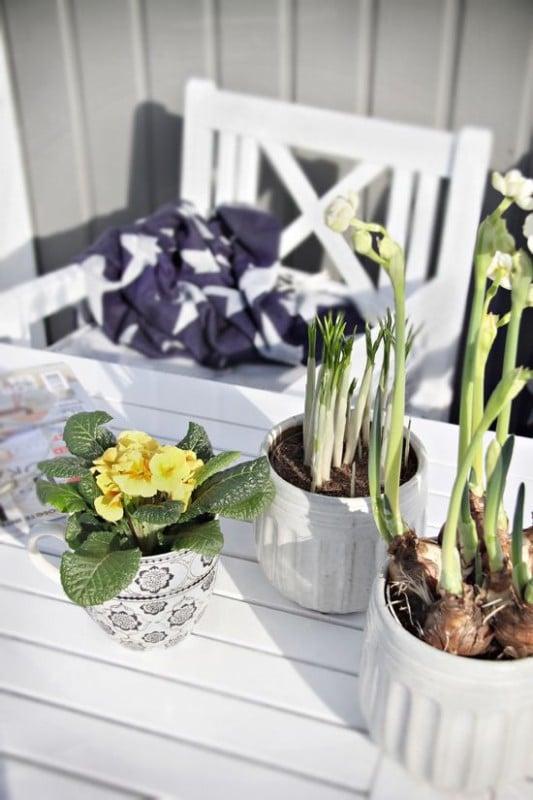 fiori-di-primavera-esterno