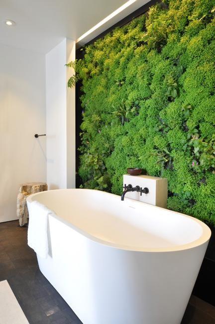 Galleria foto - Quali piante scegliere per il bagno? Foto 36