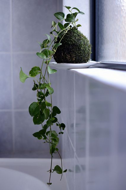 Galleria foto - Quali piante scegliere per il bagno? Foto 29