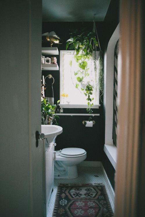 Galleria foto - Quali piante scegliere per il bagno? Foto 18
