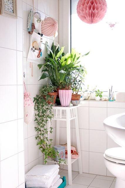 Galleria foto - Quali piante scegliere per il bagno? Foto 17