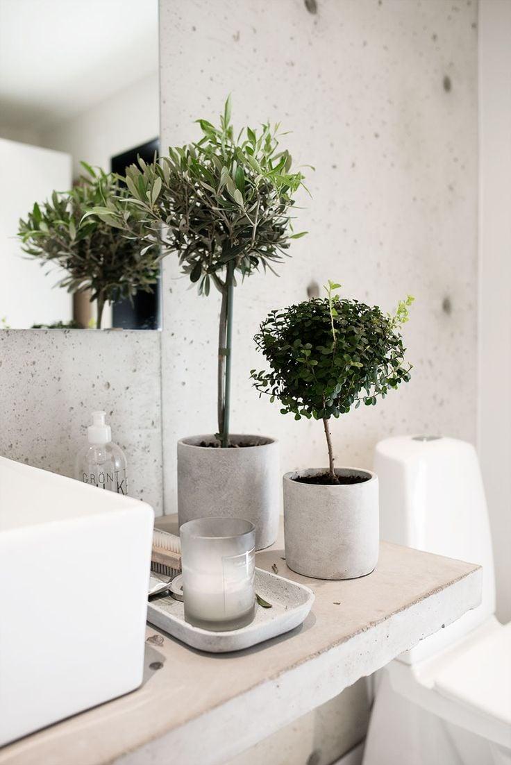 Piante Da Arredo Appartamento piante per arredare bagno: 80 idee