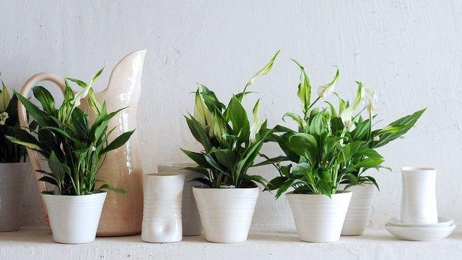 Galleria foto - Quali piante scegliere per il bagno? Foto 2