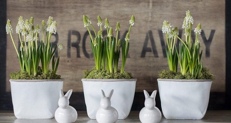 muscari-fiori-primavera