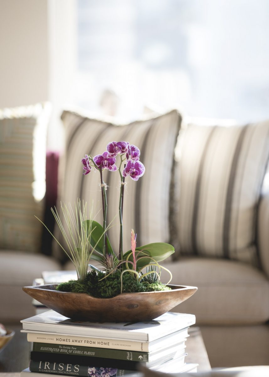 orchidee-casa-3