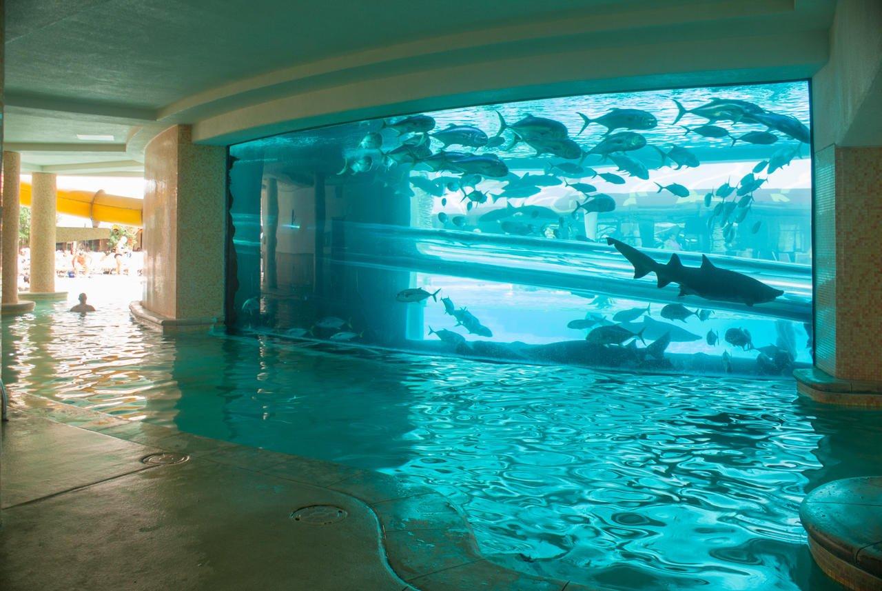 piscina-squali