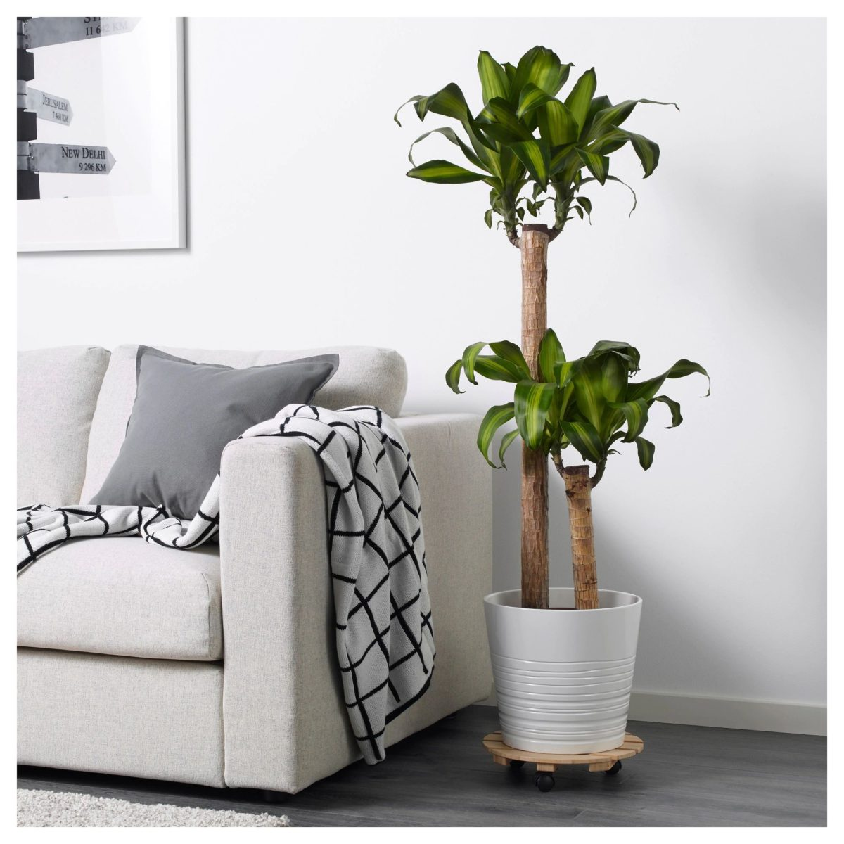 ikea-piante