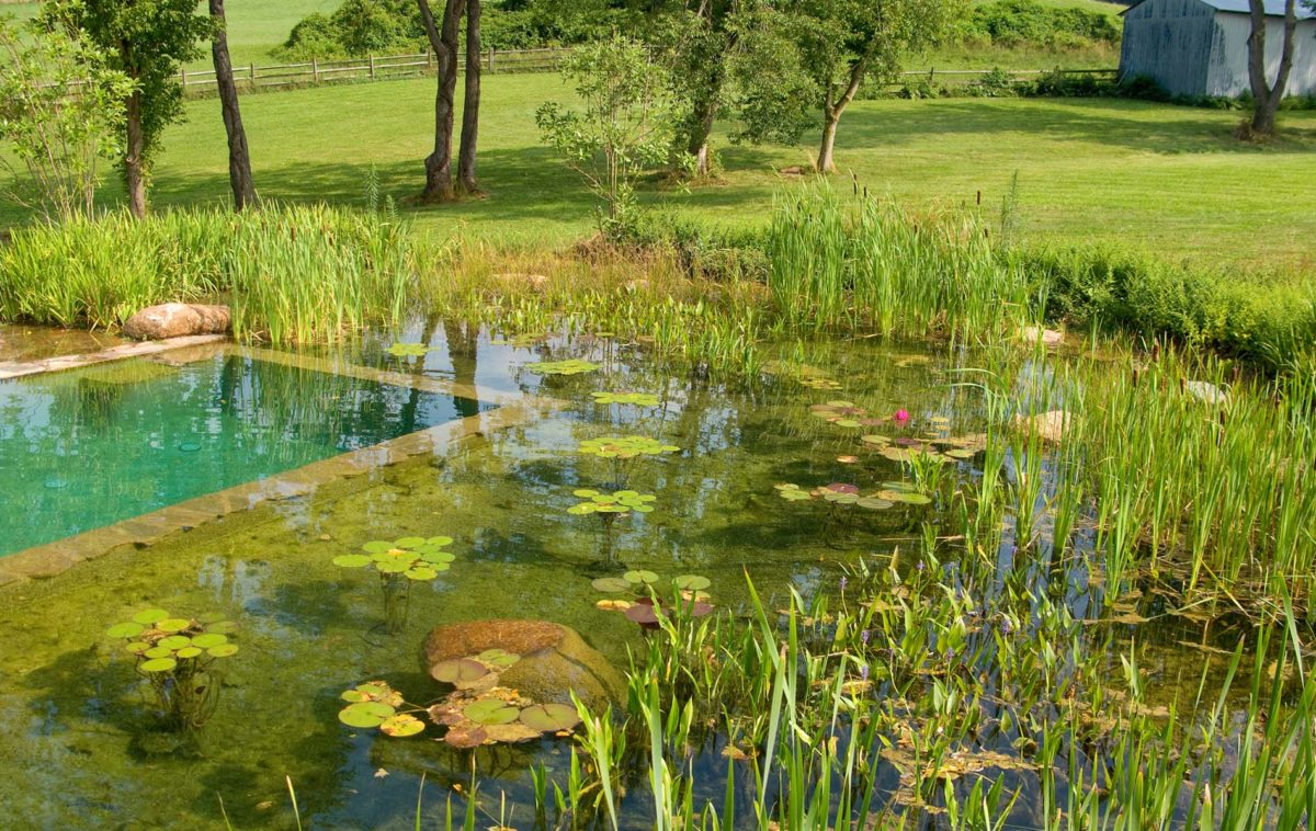 piscina-bio-come-realizzarla
