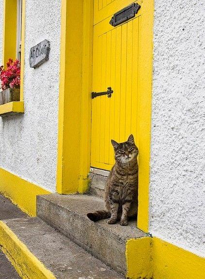 Galleria foto - Color giallo abbinamenti arredo Foto 1