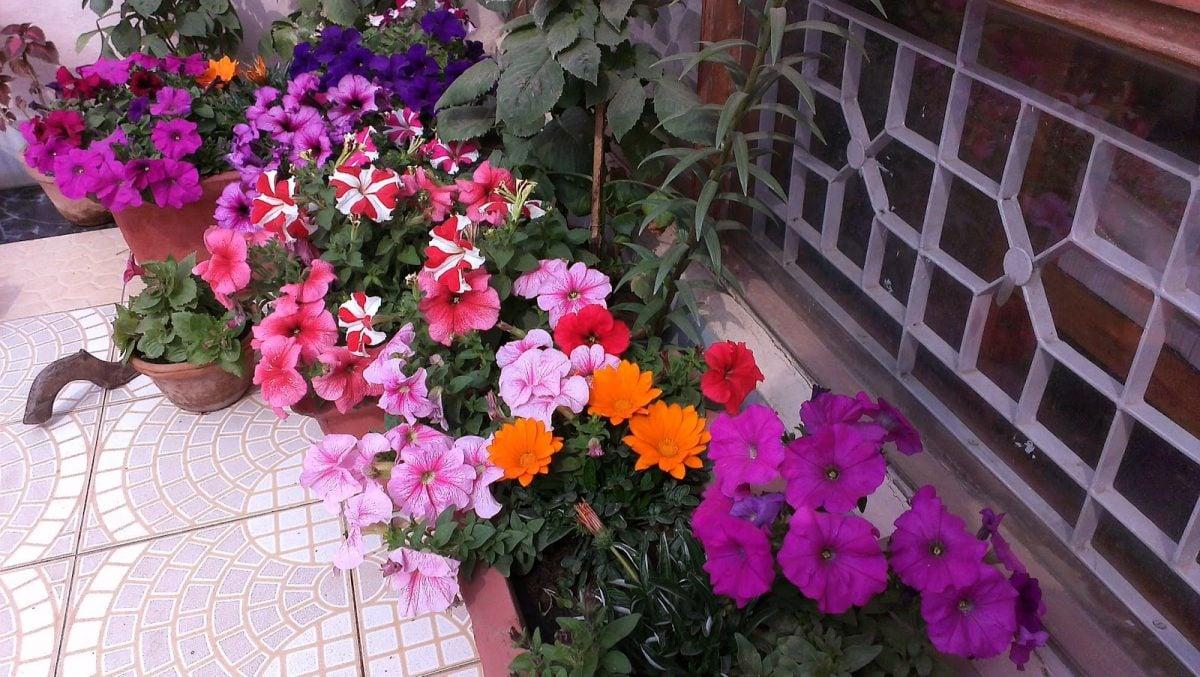 fiori-terrazzo