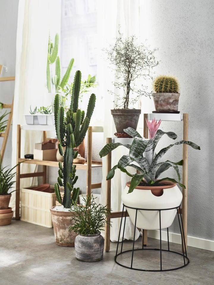 nuove-piante-ikea