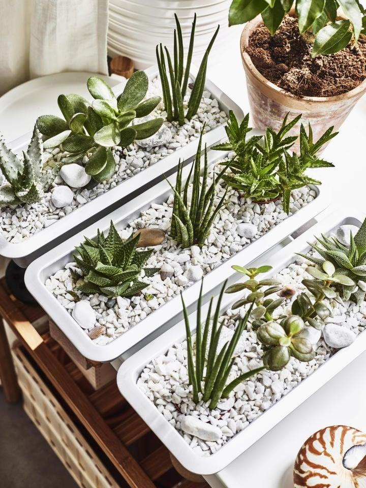 piante-grasse-ikea