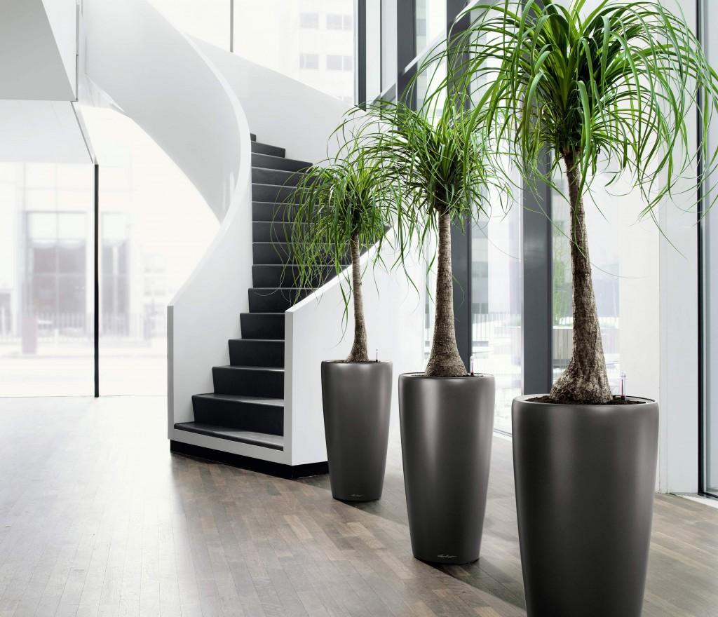 idee-piante-ingresso-casa