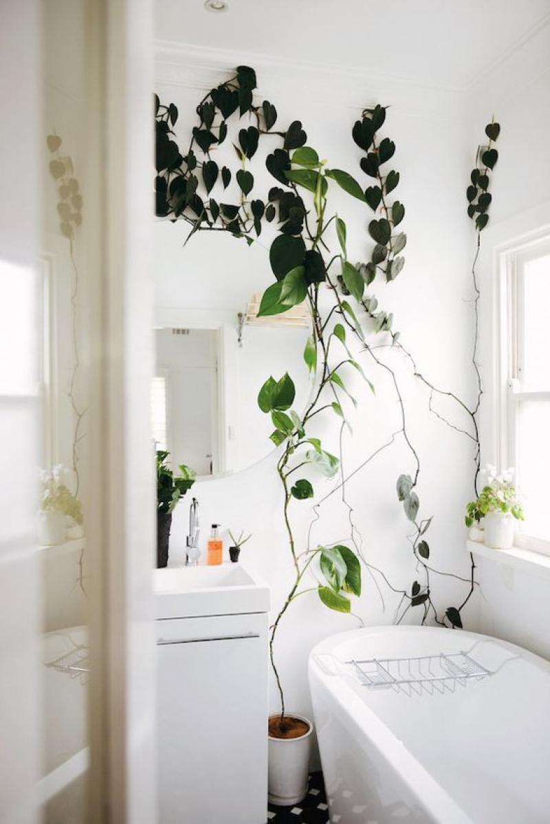 pianta-bagno