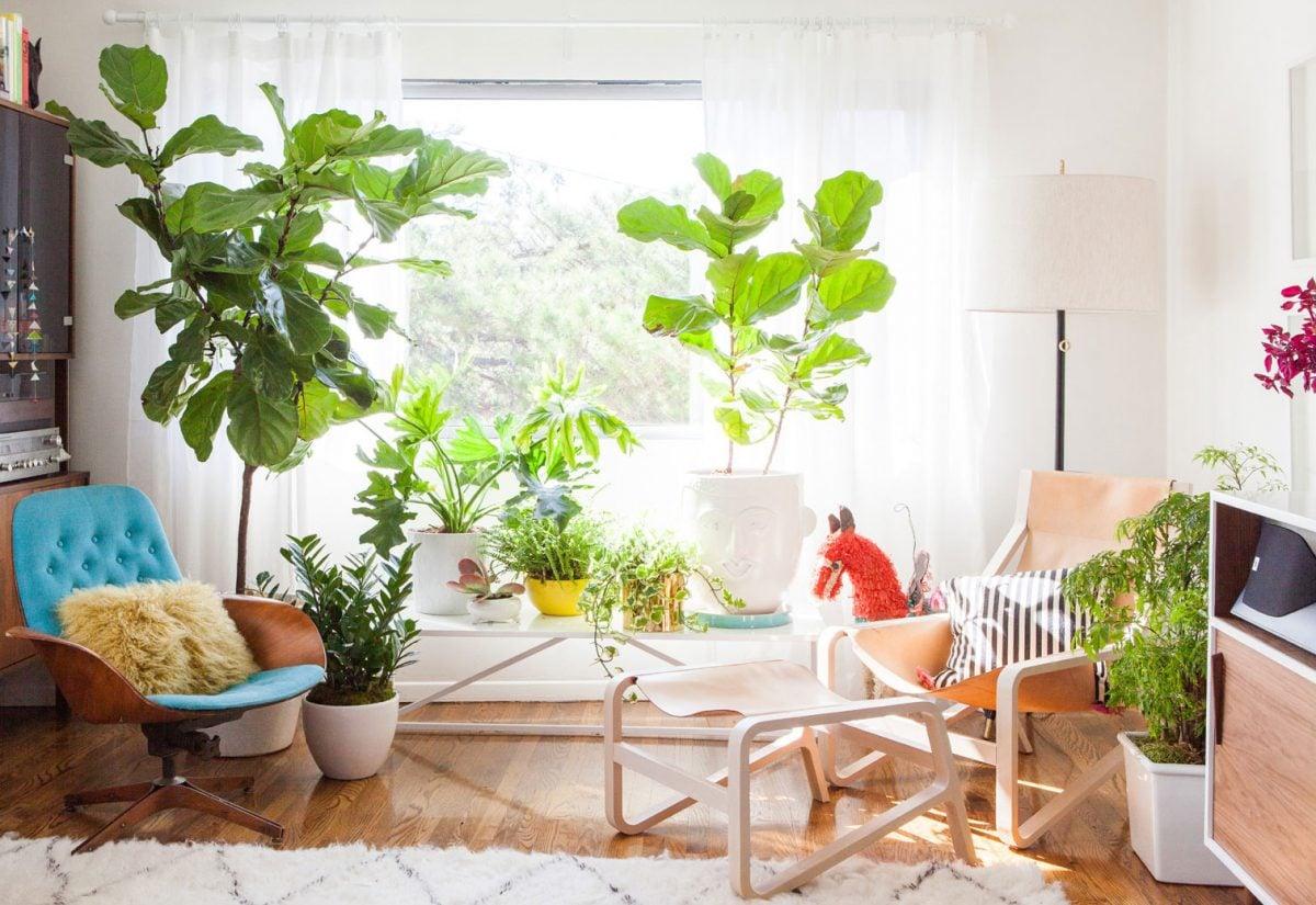 piante-4