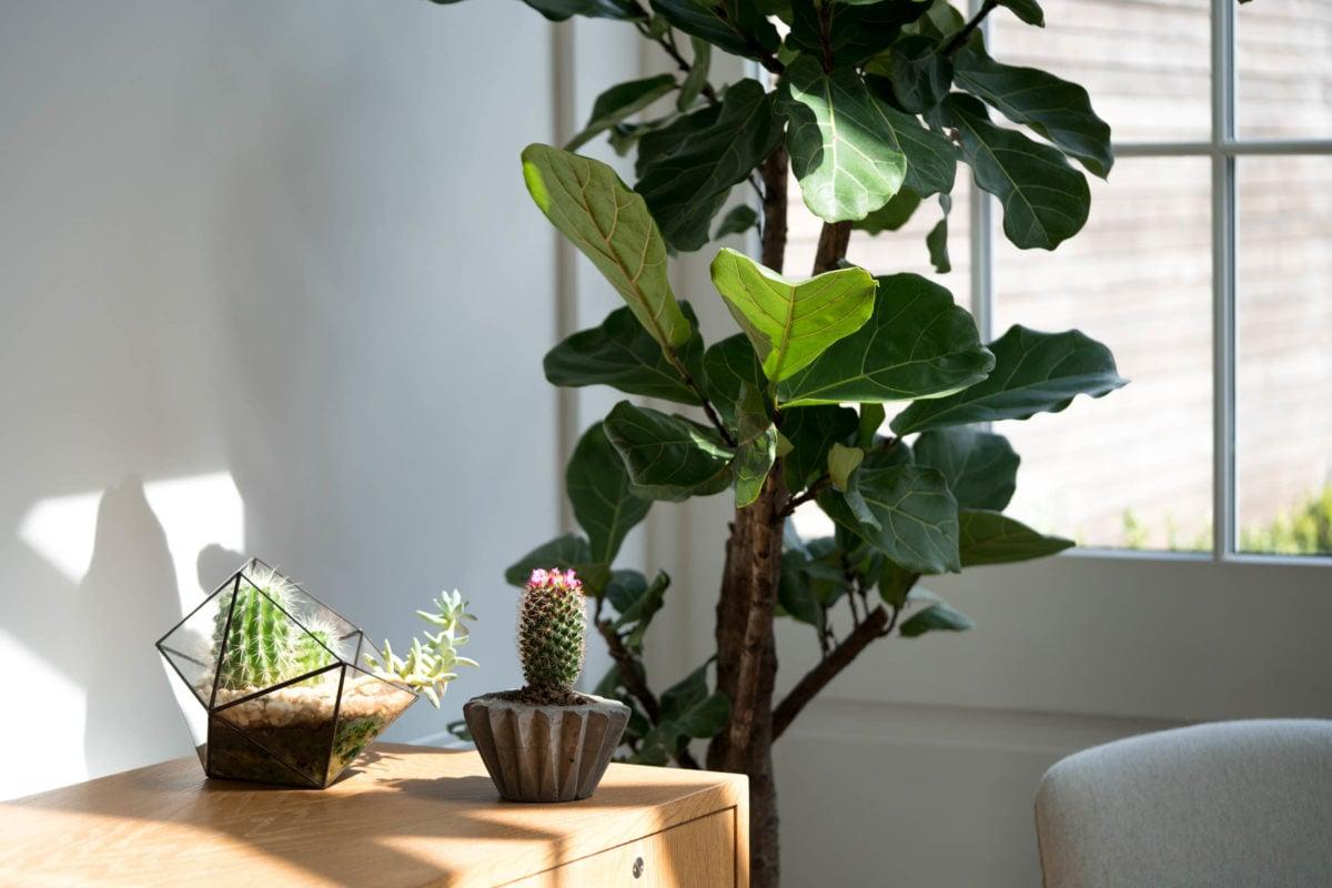 piante-casa-8
