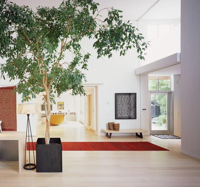 piante-dividere-ambienti-casa
