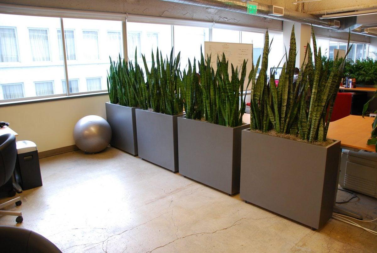 piante-per-separare-ambienti-ufficio