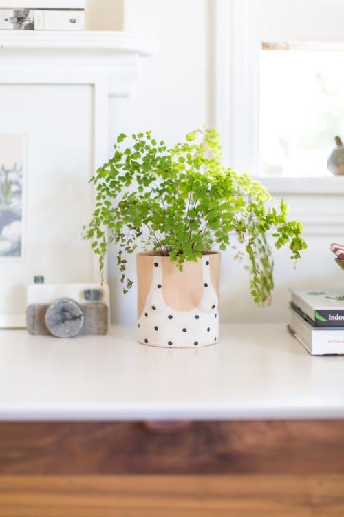 Galleria foto - Piante da cucina che purificano l\'ambiente Foto 1