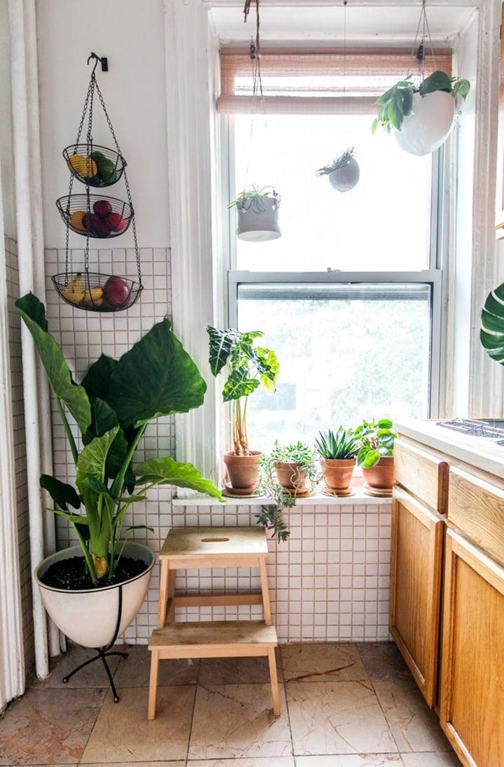 cucina-piante