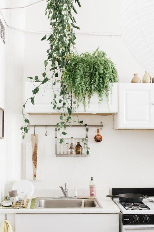 piante-cucina-felce