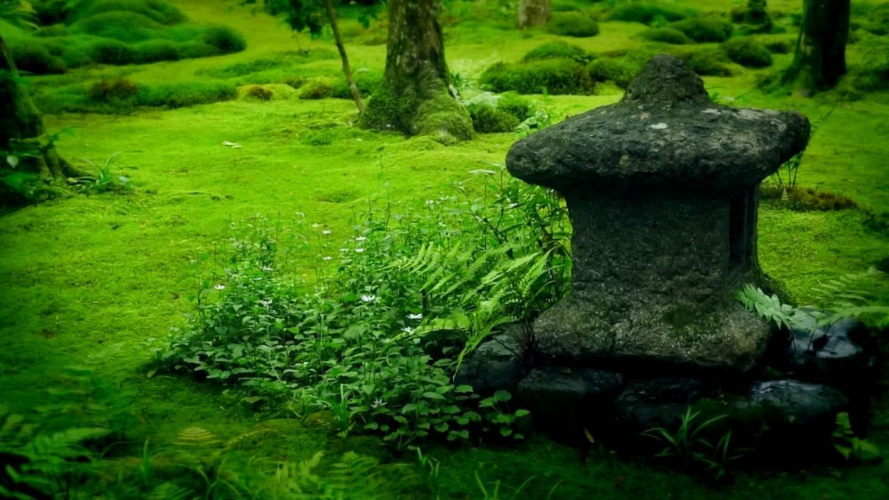 giardino-zen-muschio