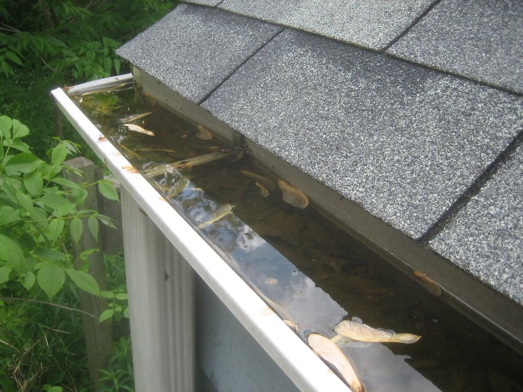 infiltrazioni-acqua-soffitto-tetto