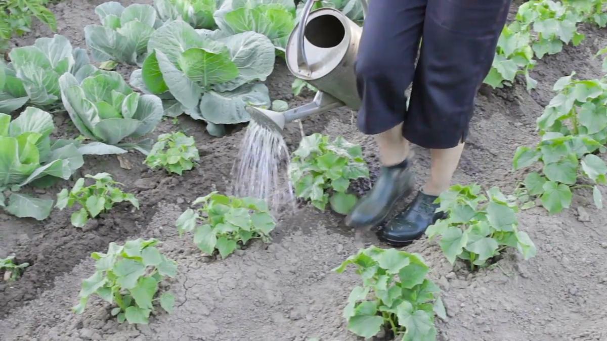 orto-in-giardino-irrigazione-annaffiatoio