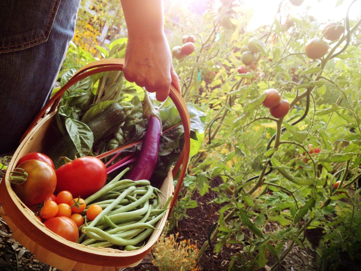 orto-in-giardino-prodotti