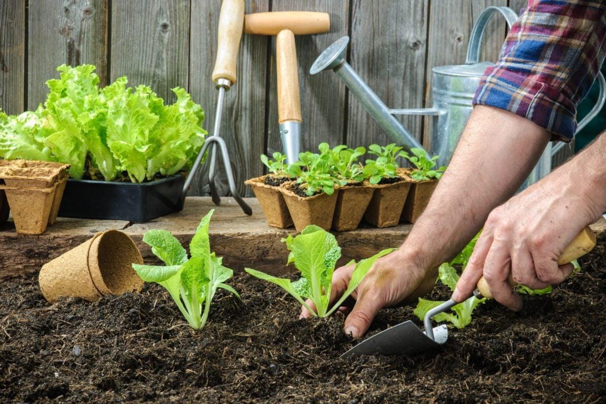 orto-in-giardino-raccolta