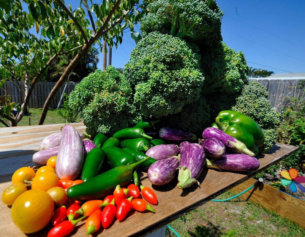 orto-in-giardino-verdura