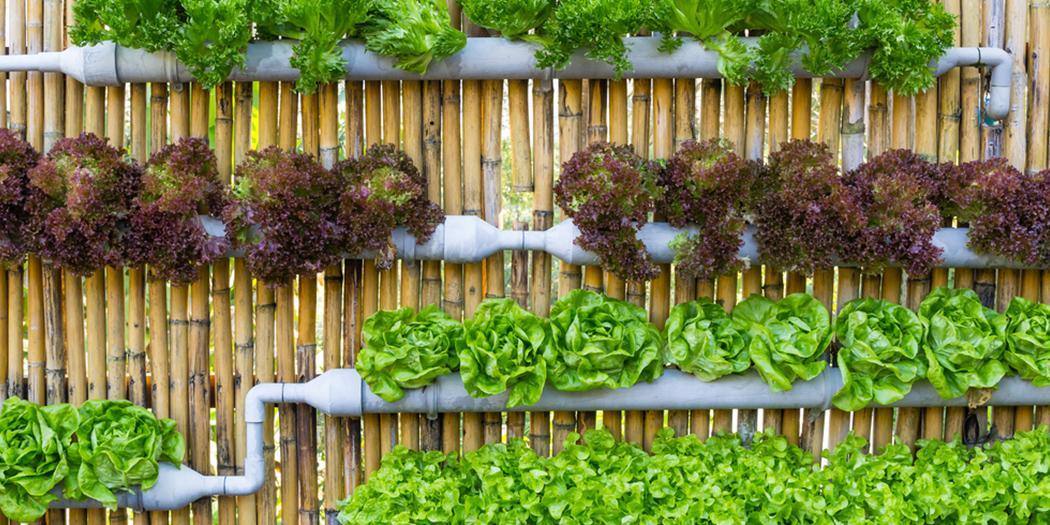 fioriere-verticali-idee-economiche