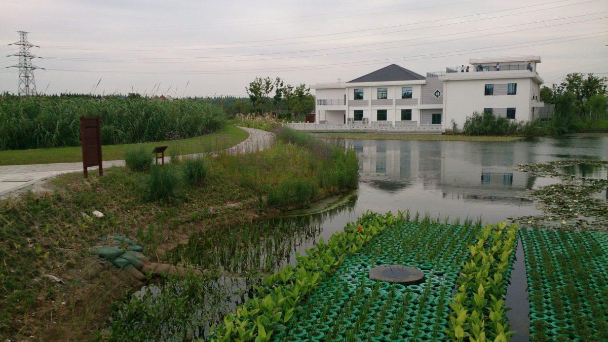 impianto-fitodepurazione-casa