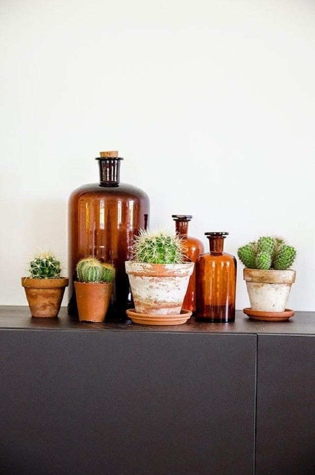 piante-grasse-salotto